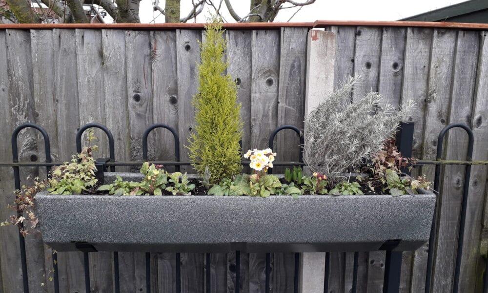 Attenborough planter