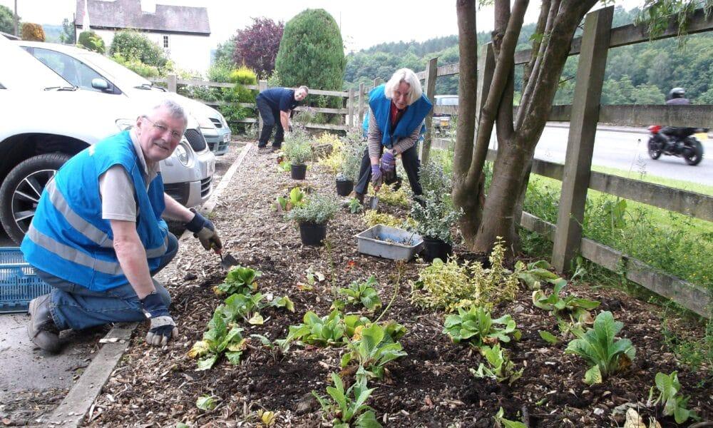 Planting around car park