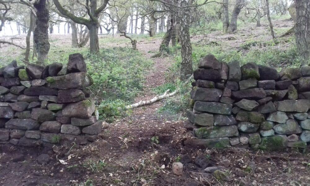 Lea Wood wall and trees