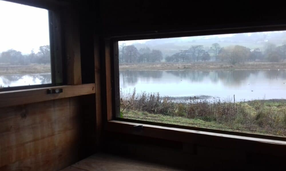 View from Wyver Lane hide