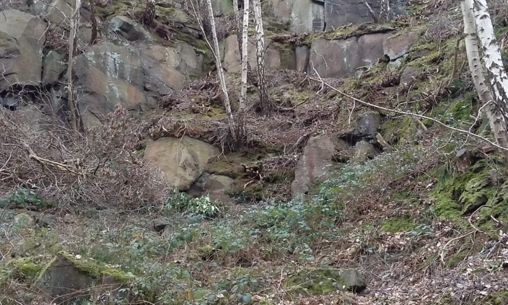 Lea Wood Birch and rocks